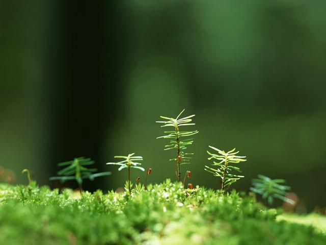 leaf002