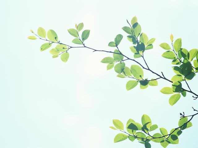 光に照らされた葉