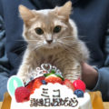 [猫]うちの猫が溶血性貧血と診断されました。