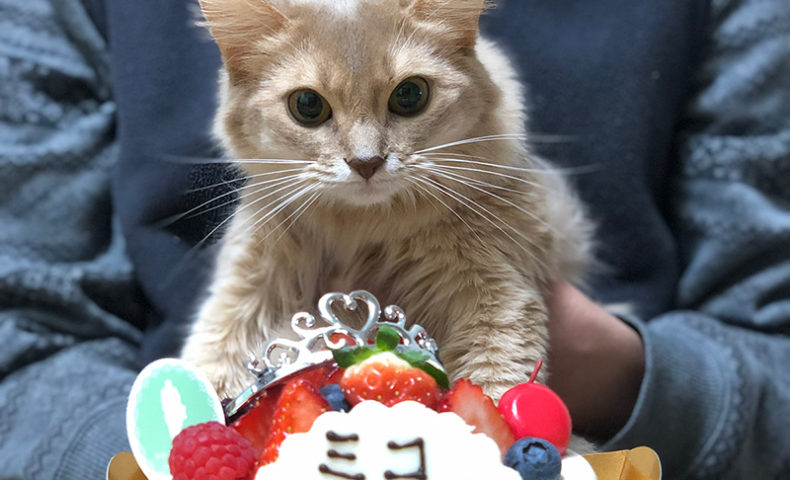 うちの猫であるミコの1歳の誕生日