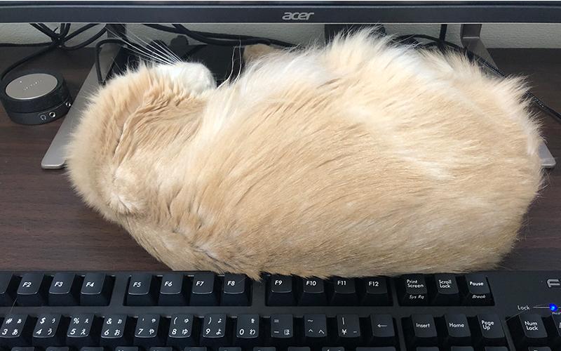 モニターの前で惰眠を貪る猫