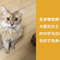 [猫]猫を飼いたい人に気をつけてもらいたいこと自分なりにまとめてみた