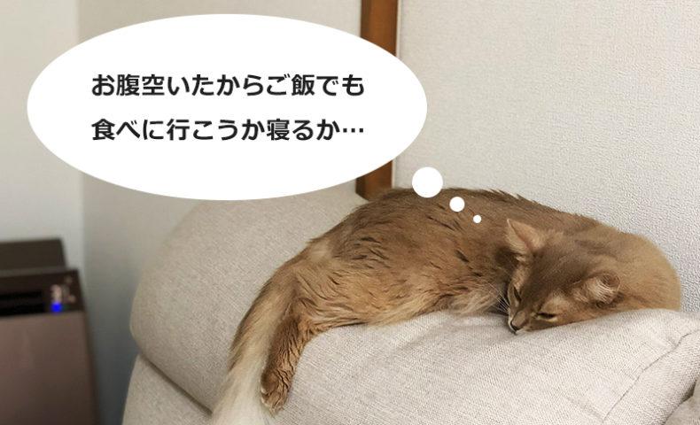 [猫]愛猫の食事って色々考えますよね?猫の食事について私なりの考えまとめ