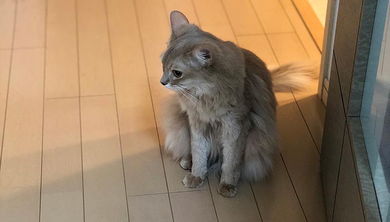 ミコ、廊下で考える。