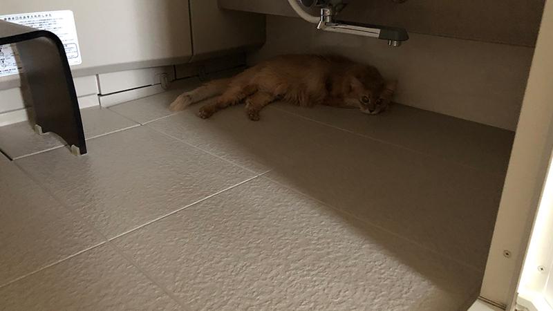 風呂場に居るミコ