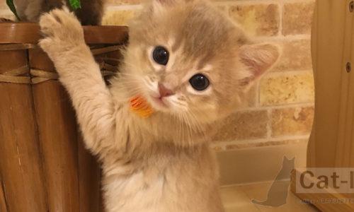 ミコ、生誕約1ヶ月頃?