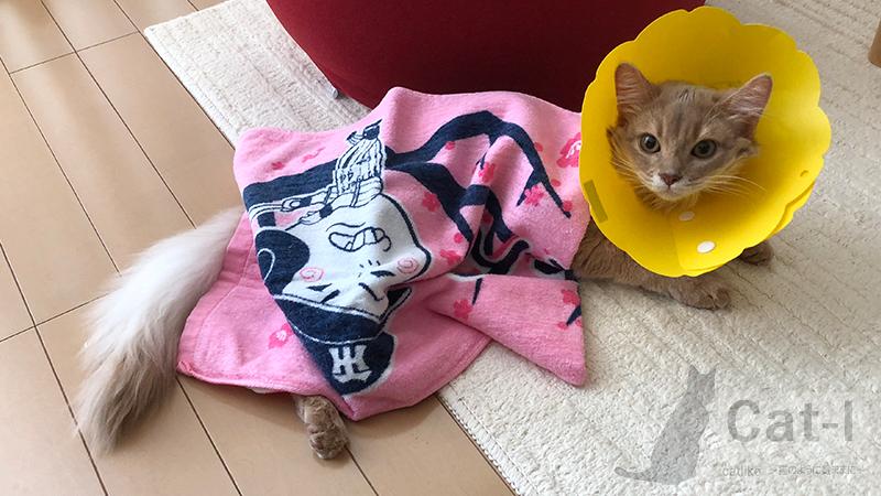 生後6ヶ月目のミコ