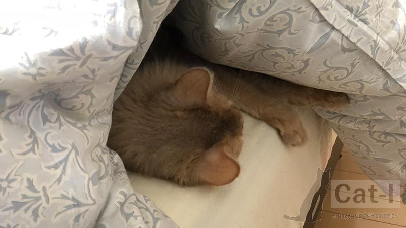 生後11ヶ月目のミコ