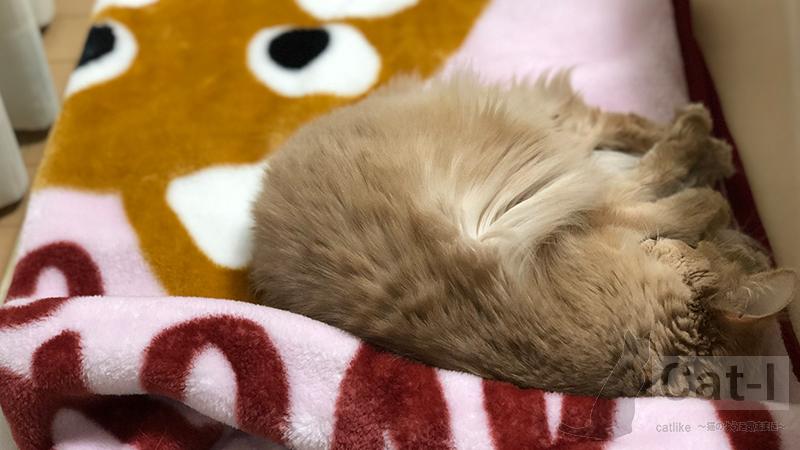 生後12ヶ月目のミコ