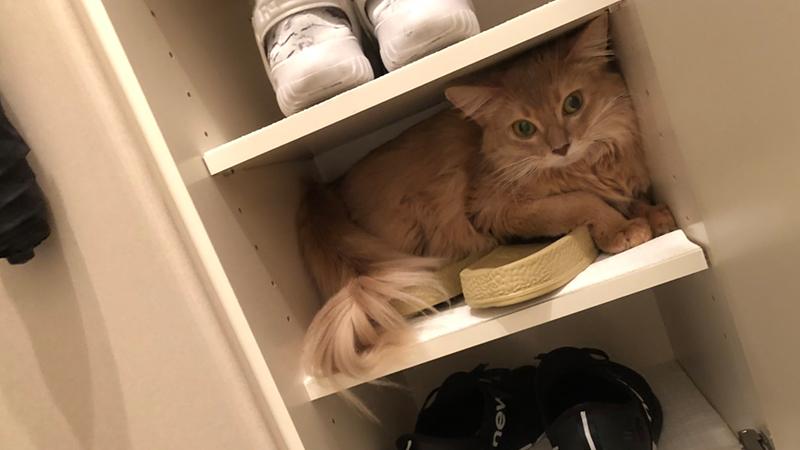 下駄箱の中のミコ