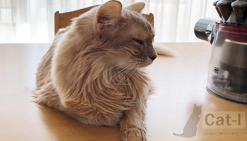 [猫]我が家のソマリ、ミコの近況。再び貧血気味に。