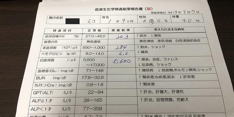 血液検査1歳9ヶ月