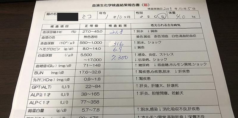 血液検査1歳10ヶ月
