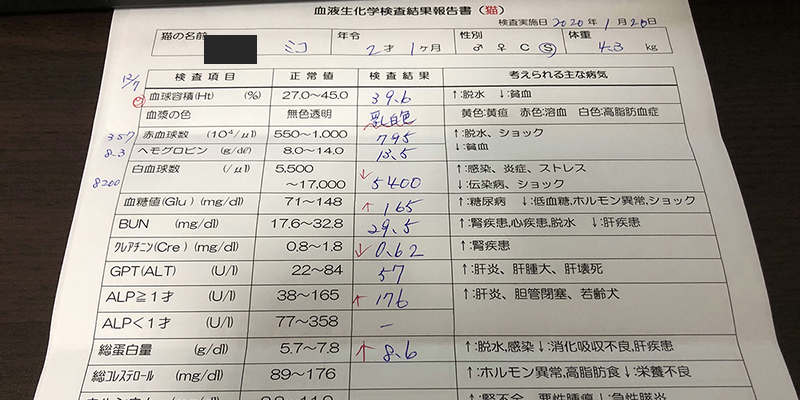 血液検査2歳1ヶ月