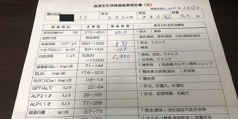 血液検査2歳2ヶ月